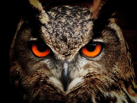 animal-animal-photography-bird-86596