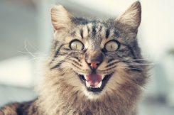 animal-animal-photography-blur-399647