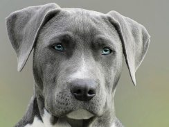 animal-canine-close-up-733416