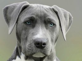 animal-canine-close-up-733416