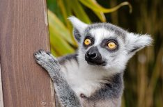 animal-eyes-fur-33149