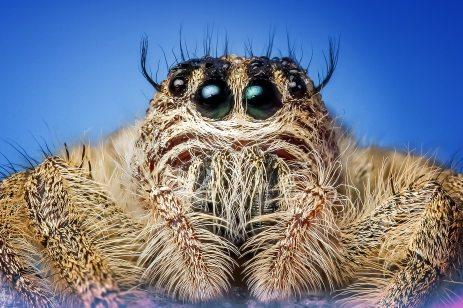 arachnid-close-close-up-257552